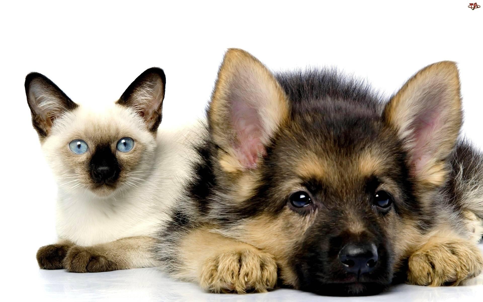 Картинки с животными для детей