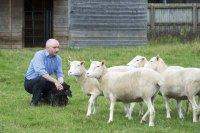 Клоны овечки Долли ничем не отличаются от обычных овец