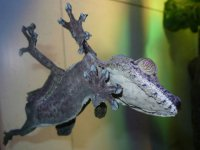 Физика в мире животных: лапа геккона