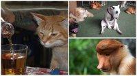 20 животных, которые тоже ненавидят понедельники